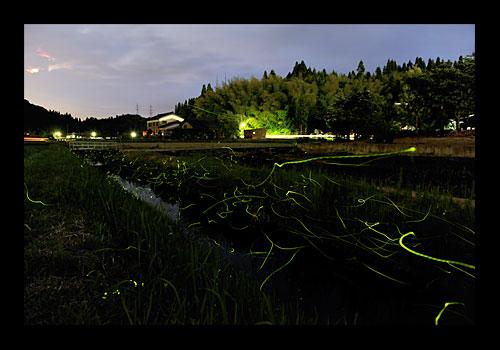 浄土寺のホタル