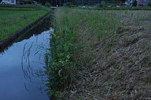 浄土寺の農業用水